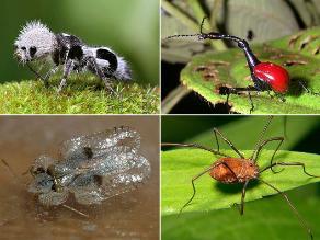 Conoce los insectos más raros del planeta Tierra