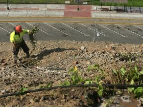 Municipio de Piura sembrará 100 mil árboles