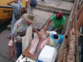 Alcalde de Arica: Fallo fue perjudicial para nuestros pescadores