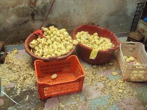 Huancayo: decomisan más de 30 bolsas de papas en mal estado