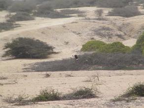 Este viernes evaluarán efectos de la sequía en el agro lambayecano
