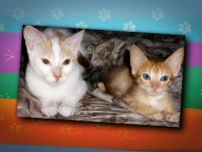 LIKE PETS: ¡Felíz día del Gato!