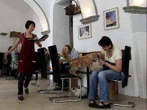 Crean restaurante de ´comida felina´ para celebrar el día del gato