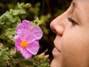 Aromas que relajan: 6 olores que quitarán el estrés