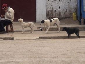 Huancayo: reportan más de 4 mil casos de mordedura canina