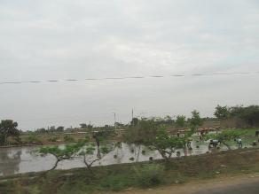 Lambayeque: más de 6 mil ha no serán sembradas de arroz