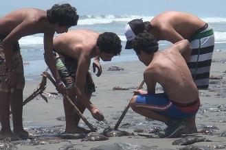 Chiclayo: limpian playa Lobos por muerte de malaguas y delfines