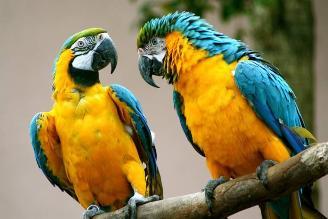 El Perú celebra por primera vez el Día Mundial de la Vida Silvestre