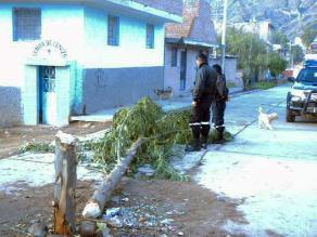Ayacucho: hombre muere aplastado por árbol de yunza