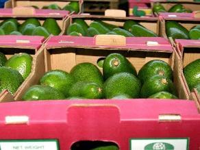 Agroexportaciones de Piura superaron los US$ 2,800 millones el 2013