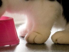 Conoce 7 datos curiosos que deberías de saber sobre las patas del gato
