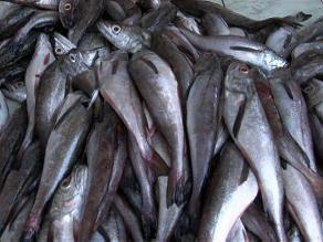 Expenderán conservas de pescado a precios económicos en Cusco