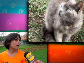 LIKE PETS / Gatos: mitos acerca de la toxoplasmosis
