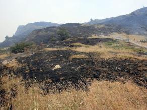 Registran más de 500 incendios forestales en el Cusco