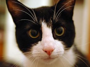 LIKE PETS / Pelo de gato: Mitos y verdades