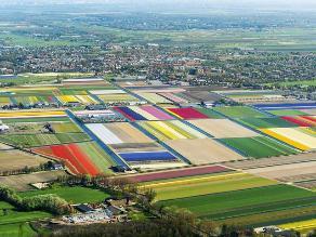 Espectáculo de colores: Una vista por los tulipanes de Lisse