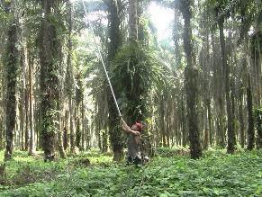 SNI: Única planta de biodiesel peruana paraliza producción