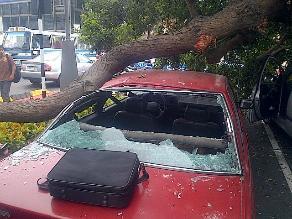 Dos personas se salvan de milagro cuando un árbol cayó sobre sus autos