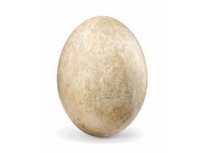 Venden un huevo de ave elefante a 200 mil dólares