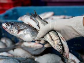 Semana santa: ¿Qué pescados comer y cómo disfrutarlos mejor?