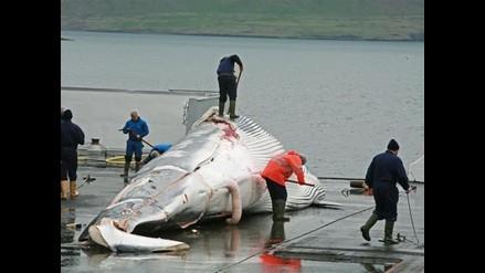 Japón seguirá pescando ballenas aunque reducirá las capturas