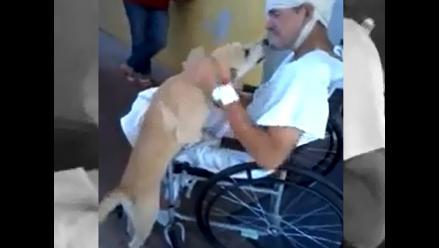 Amor de perro: Mascota se reencuentra con su amo herido por asaltantes
