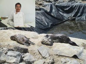 Lambayeque: pingüinos murieron por mordedura de animal