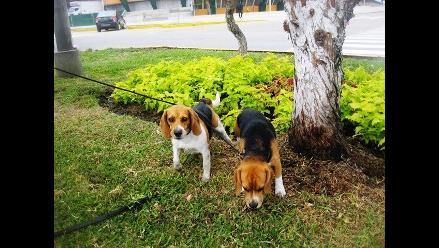 Trujillo: Dueños de perros que muerdan a personas pagarán S/. 3.800