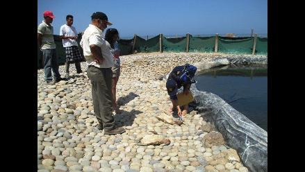Chiclayo: evalúan reubicación y sanción por muerte de pingüinos
