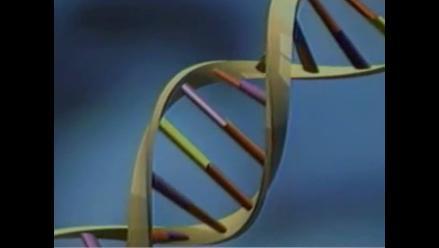 Genes tenaces en el cromosoma Y defienden la supervivencia masculina
