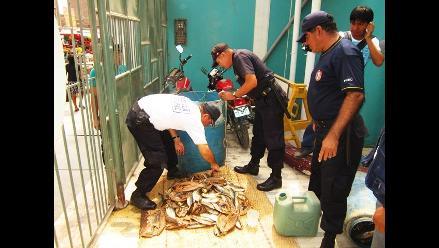 Cusco: decomisan 169 piezas fósiles