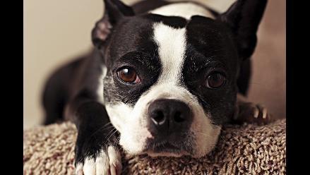 LIKE PETS / ¿Mi perro puede tener alergias?