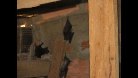 Murciélagos se multiplican y amenazan con expandirse en Apurímac