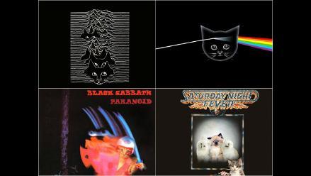 Gatos imitan portadas de diez discos que deberías escuchar