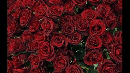 Trujillo: en vísperas del Día de la Madre precio de rosas sube un 50%