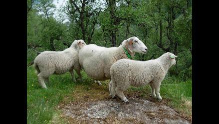 Vivir con ovejas hasta oler a rebaño, recomienda Papa Francisco