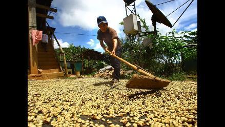 Lanzan en el VRAEM plan para sustitución de cultivos de coca