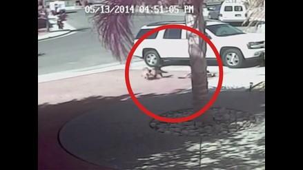 Increíble: gato salva a un niño de ataque de perro