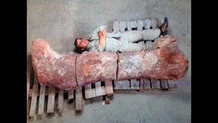 Hallan en Argentina restos del dinosaurio más grande descubierto hasta ahora
