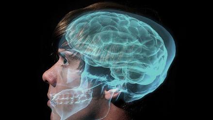 Conoce cinco datos curiosos que no sabías del cerebro