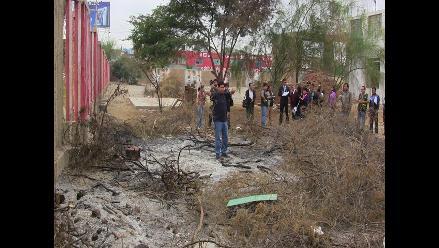 Ica: denuncian tala de plantas nativas en Dirección Regional de Cultura