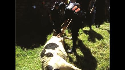 Arequipa: agricultor muere tras ser corneado por un toro