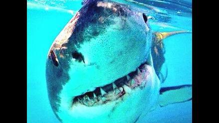 Siguen movimientos de tiburón blanco a través de Twitter