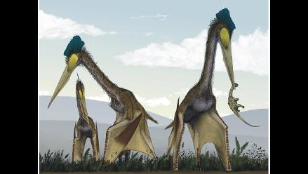 China: Hallan fósiles y huevos bien conservados de pterosaurios
