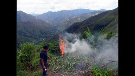 Perú redujo 17% cultivos de hoja de coca en el 2013, afirma ONU