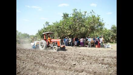 Chiclayo: campaña de arroz culminó sin mayores pérdidas económicas