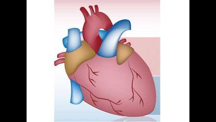 Descubren método para acelerar regeneración de células del corazón