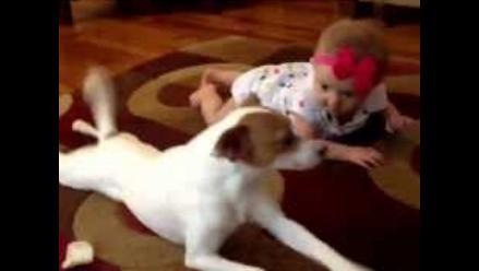 Adorable lección: Perro enseña a gatear a bebé