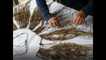 Encuentran más de veinte quipus en sitio arqueológico Incahuasi