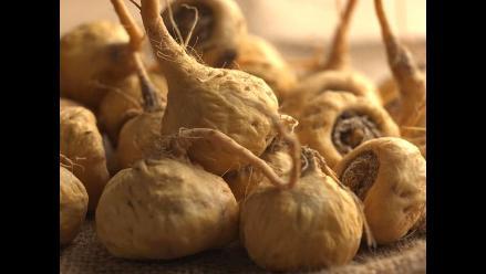 China investiga denuncia de ADEX sobre presunto cultivo ilegal de maca